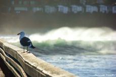 Pier Gull | Ocean Beach, CA.